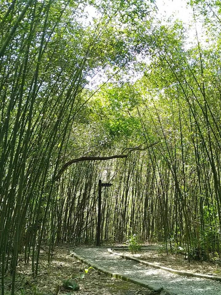 【疫期走出去 · 自然森呼吸】達人帶路!小烏來竹林秘境古道森林浴一日輕旅