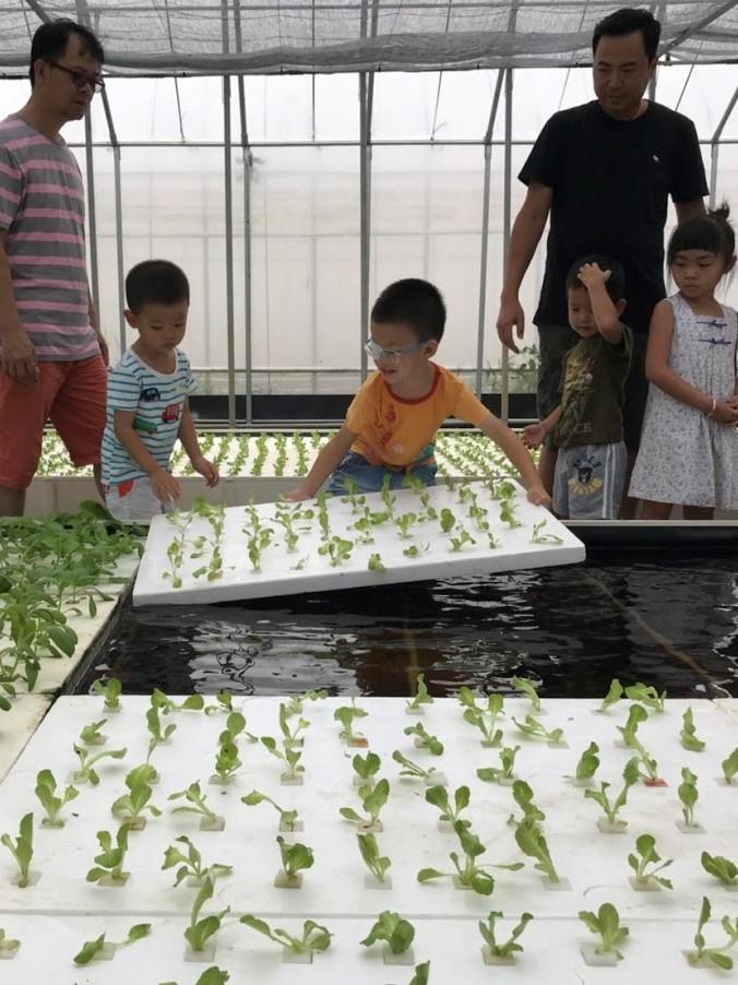 【蘆竹大古山 · 魚菜共生體驗營】誰說需要土壤才能種菜!?「水耕蔬菜」現在正夯!